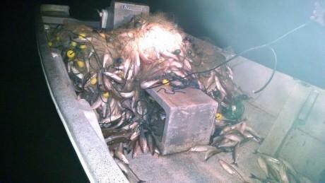 Pescado decomisado